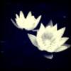 °宿命っ丶守护花家丶聪少