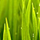1001_286252647_avatar