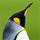 1001_823538130 large avatar
