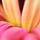 1001_1127462216_avatar