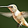 1001_1841368648_avatar