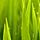 1001_432428289 large avatar