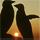 1001_187555718 large avatar