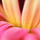 1001_1263673765_avatar