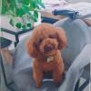 LyM【,发布寻狗启示热爱宠物狗狗,希望流浪狗回家的狗主人。