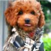 武藏,发布寻狗启示热爱宠物狗狗,希望流浪狗回家的狗主人。
