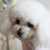 飘仙,发布寻狗启示热爱宠物狗狗,希望流浪狗回家的狗主人。