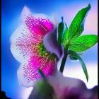 幸福陌上花