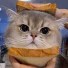 紫梦水晶爱恋