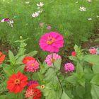 荒野↑の野玫瑰