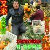 �M南石灰�橙